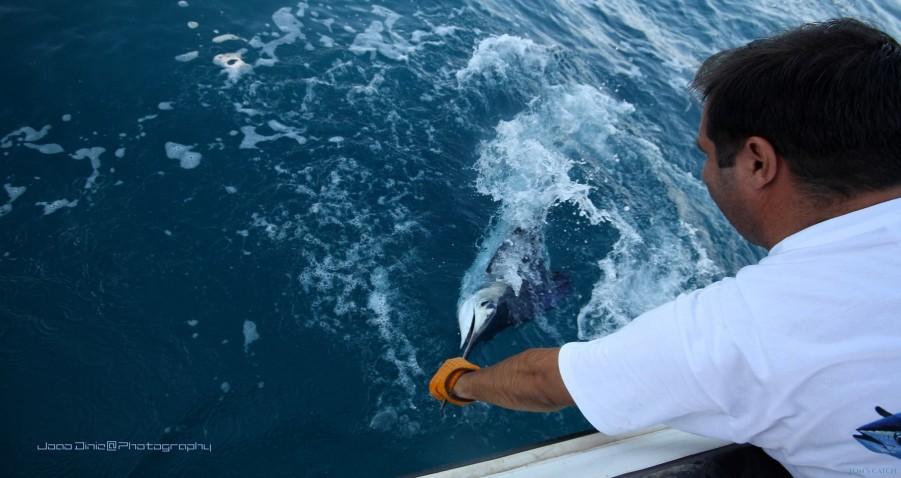 Charter de pêche Safio