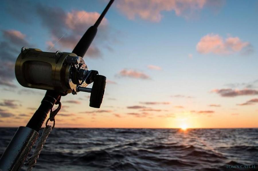 Charter de pêche Scorpio