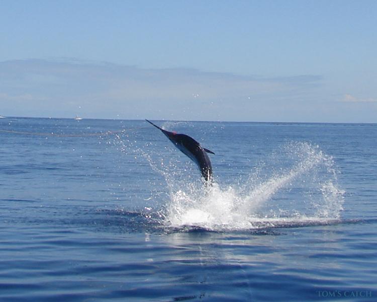 Charter de pêche Sea Lady