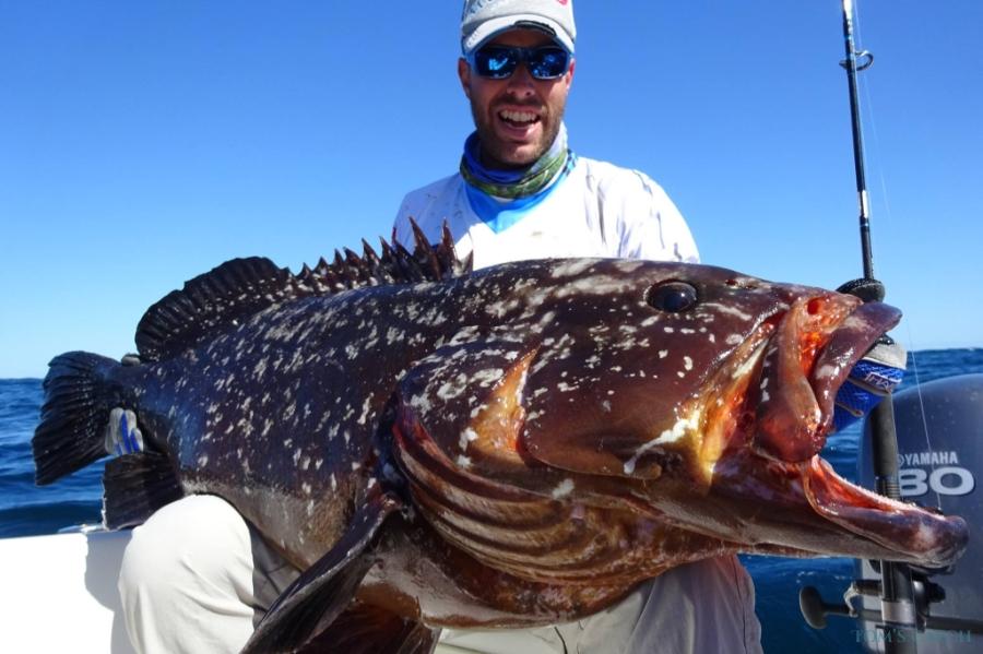 Seriole Açores pêche