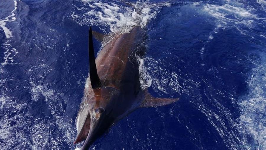 Charter de pêche Sorted