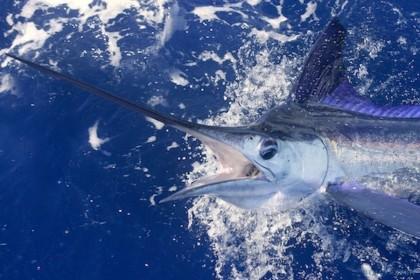 Charter de pêche Xacara