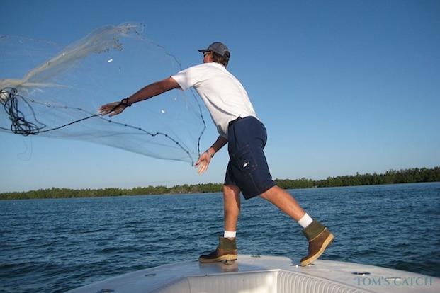 Pesca con vivo