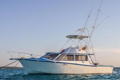 Baloo Zanzibar vissen