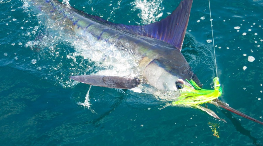 Charters Black Fin 35 FT