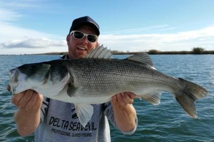 Delta Seadevil Deltebre vissen
