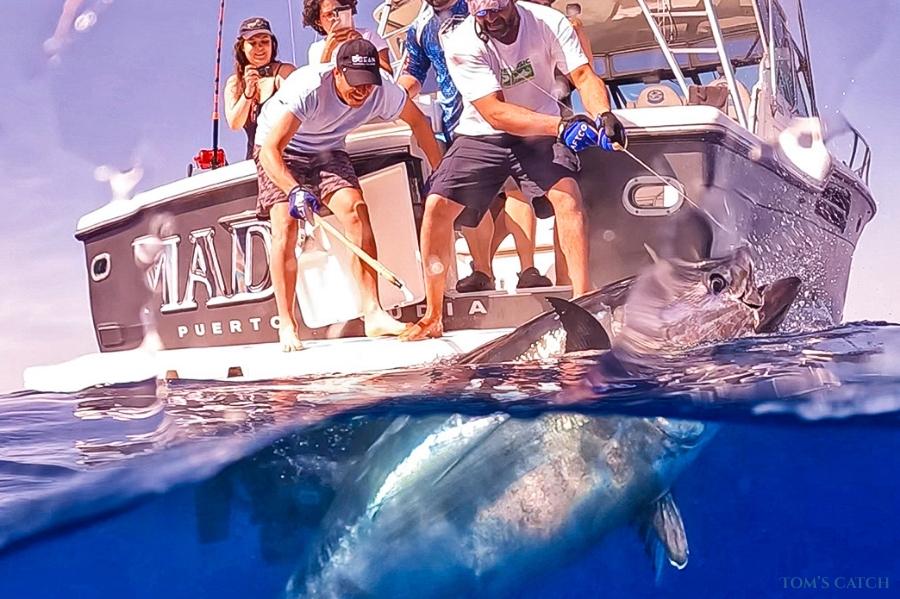 Mad Max Tiara Mallorca vissen