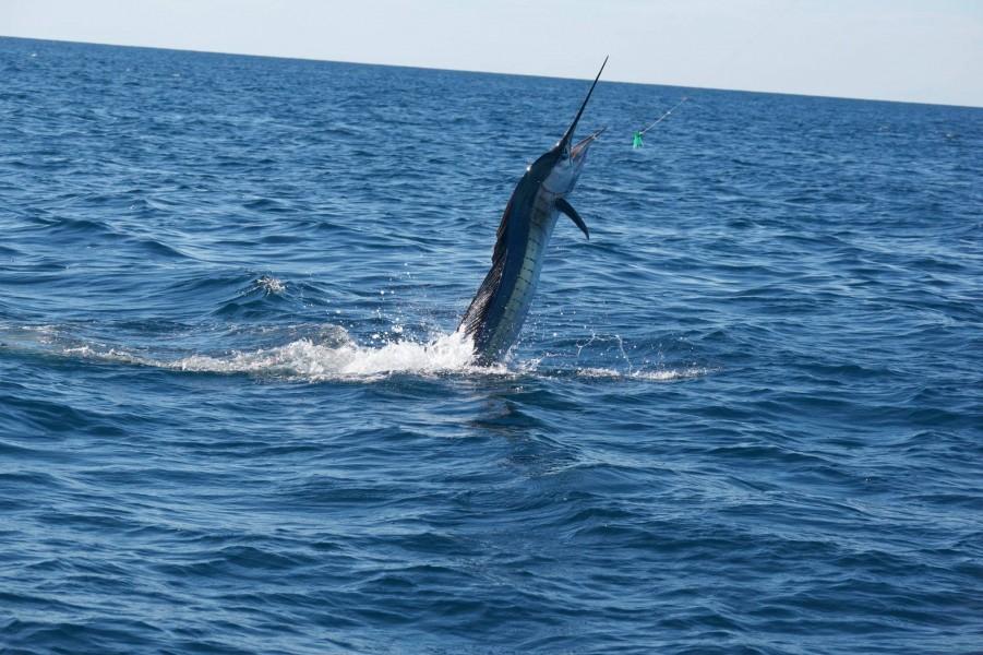 Charters Raggie Fishing
