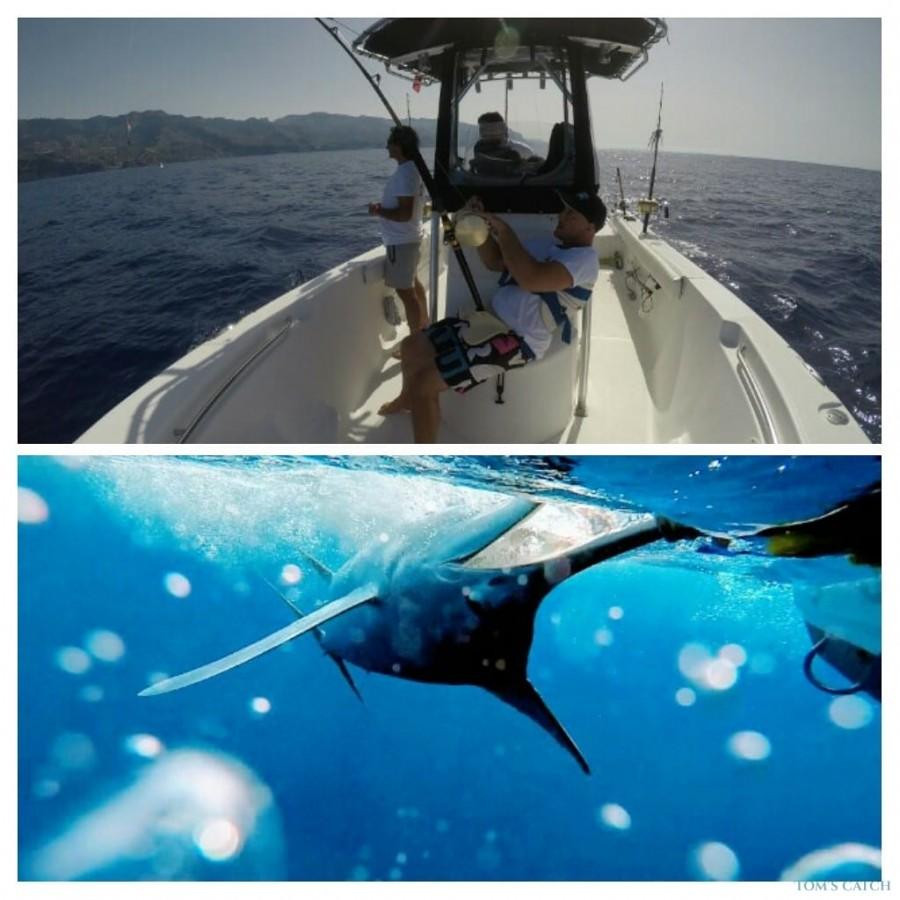 Charters Sea Fox 236 Madeira Sea Fishing