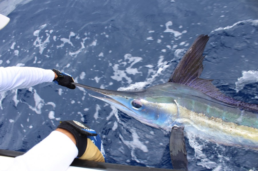 Charters Seazores