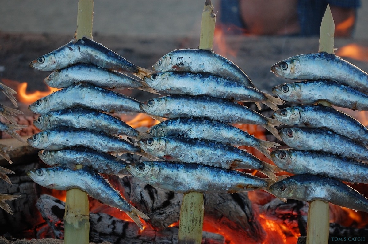 Malaga visgebied