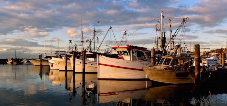 New South Wales visgebied