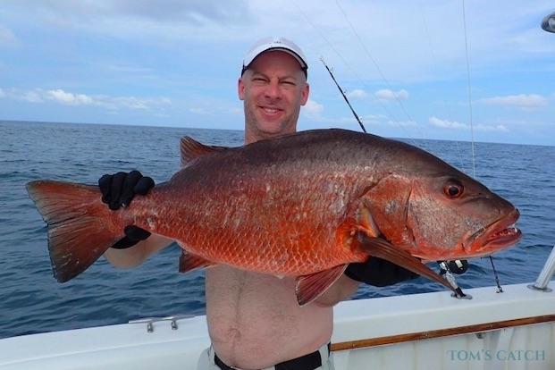 Cubera Snapper vissen