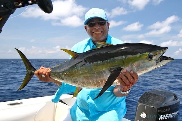 Geelvin tonijn vissen