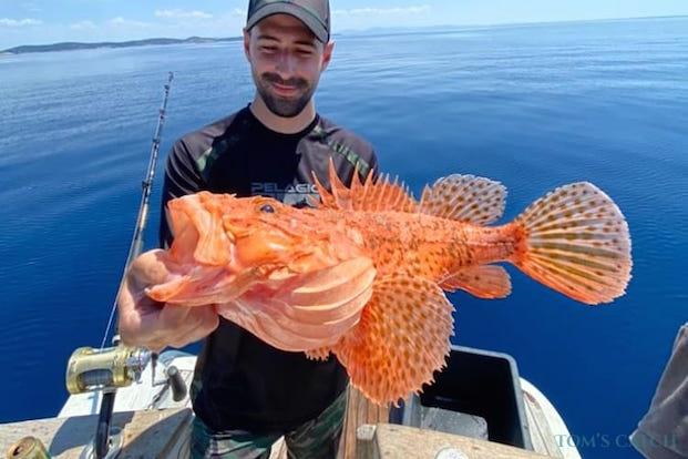 Rode schorpioenvis vissen