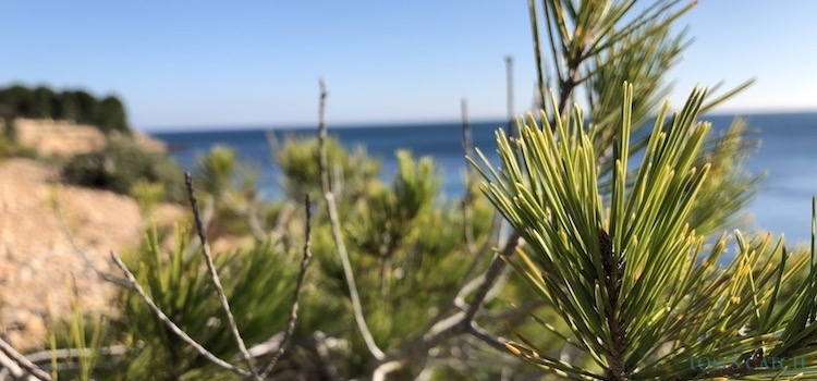 Zone de pêche Sardaigne